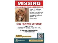 Missing Cat North Wales