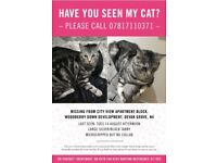 MISSING CAT - Have you seen my cat?