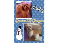 Dog Grooming From Your Home