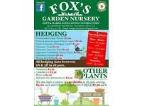 LAURELS/HEDGING/SHRUBS/PLANTS FOR SALE.