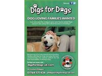 Dog loving families wanted to look after dogs for weekends and holidays