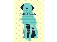 Freddie And Friends, Dog walking, Pet sitting and Home Boarding