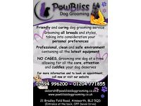 PawBliss Dog Grooming, a friendly and caring dog grooming service based in Ainsworth, Bolton BL2 5QD