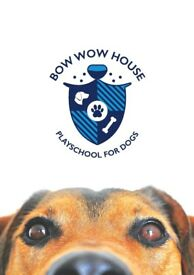 Dog Day care and Boarding - Bow Wow House - Play school for dogs
