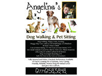 Angelina's Dog Walking & Pet Setting Service Very Caring / Home from Home