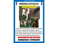 Jack Russell terrier and Lakeland x patterdale terrier missing