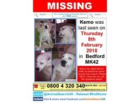 Lost Kemo....helping him be reunited with his family.