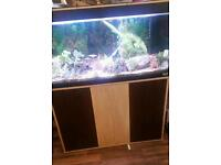 Tropical fish tank and cabinet