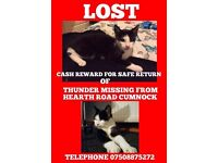 MALE CAT(back&white), LOST FROM HEARTH RD, CUMNOCK SINCE SEPT 2016