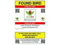 African grey parrot found in Birmingham
