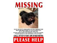 Lost dog Holytown