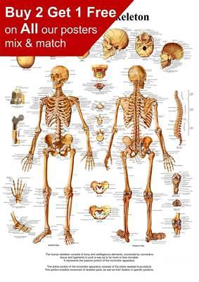 Human Skeleton Bone Chart Poster A5 A4 A3 A2 A1