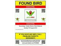 Cockatiel found in Stourbridge