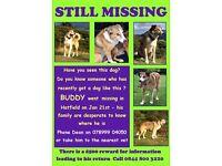 Missing Dog Buddy