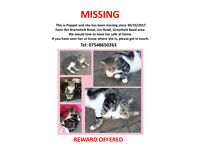 Missing Tabby Cat - Southsea/Eastney - REWARD OFFERED