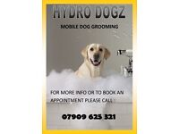 Mobile Dog Grooming ( We Come To You ) In Clydebank