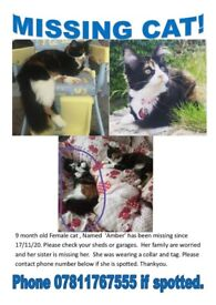 Missing Cat since 17/11/20