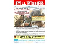 REWARD. Female tabby cat, Cleo. Missing from Chatham Kent
