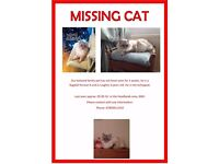 MISSING CAT!!! BEAUTIFUL WHITE LONG HAIRED MALE MISSING FROM NN3 AREA.