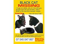 Black cat MISSING in N7