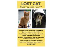 Lost Ginger Cat - Clapton Pond Area