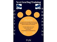 Puppy Training and Socialisation Classes/Adult Classes