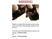 😺MISSING MALE BLACK CAT 😺