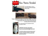 New cat homes needed - 2 cats separately and 2 together