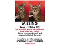 MISSING/STOLEN - male stripy tabby cat from Baldock, Hertfordshire - REWARD