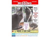 ***STILL MISSING*** All grey- female cat- Wishaw