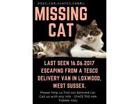 MISSING CAT OZZY - LAST SEEN LOXWOOD, WEST SUSSEX