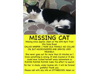 Missing Cat - Dyke Road Area - Brighton - * Kitten *