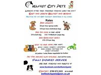 Pet Taxi Dog Walking Pet sitting - BelfastCityPetz - looking after loved ones while you're away