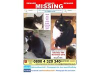MISSING CAT-MORPETH