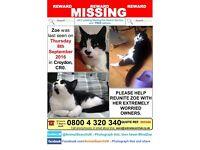 Missing cat Zoe