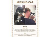 Monty Cat Missing - ££ REWARD IF FOUND