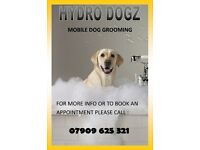 Mobile Dog Grooming ( We Come To You ) In Glasgow & Surrounding Areas