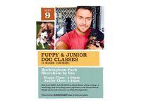 Puppy and Junior Classes