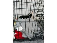 Small dog/puppy crate