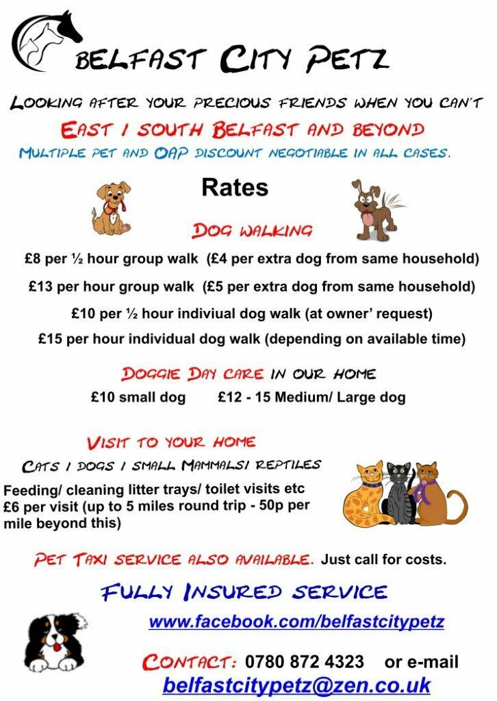 Pet Taxi Dog Walking Pet Sitting Belfastcitypetz Looking After