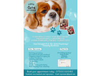 Fully Trained Dog Groomer - Southside (Parkhouse - G53)