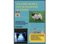 MOBILE DOG ULTRASOUND SCANNING