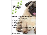 Wags Bristol - Dog Walking, Home Boarding, Daycare, Pet Visits