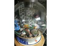 Bi orb fish tank and accessories