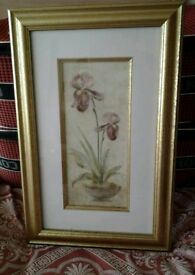 Gold framed picture (32.5cmx50cm)
