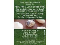 Peel park lost sheep hunt