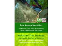 Tree Surgeon Medway, Sittingbourne & Maidstone