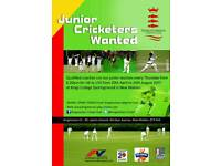 Junior cricketers wanted for summer sessions