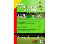Junior cricketers wanted for winter sessions