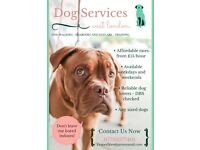 Professional and friendly - Dog Walking, Boarding and Daycare Services - West London
